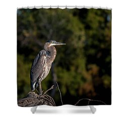Heron At Sunrise Shower Curtain