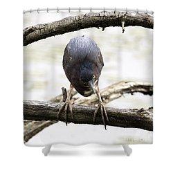 Heron Attitude Shower Curtain