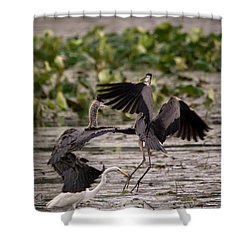 Heron Battle Shower Curtain