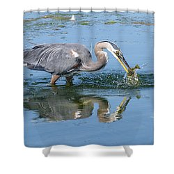 Great Blue Heron Catches A Fish Shower Curtain