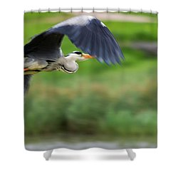 Shower Curtain featuring the photograph Heron Flying Turning In Flight by Scott Lyons