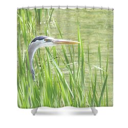 Heron In The Reeds Shower Curtain by Anita Oakley