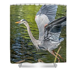 Shower Curtain featuring the photograph Heron Liftoff by Kate Brown