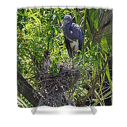 Heron With Chick In Nest Shower Curtain by Kenneth Albin