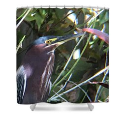 Heron With Yellow Eyes Shower Curtain by Val Oconnor