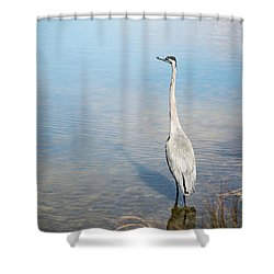 Heron's Watch Shower Curtain by Gwen Vann-Horn