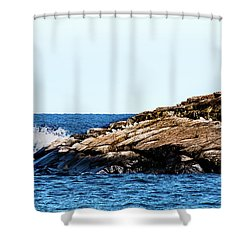 Herring Gull Picnic Shower Curtain
