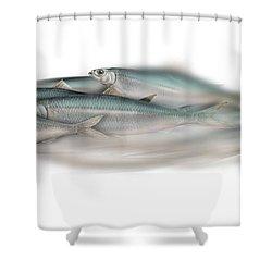 Herring School Of Fish - Clupea - Nautical Art - Seafood Art - Marine Art - Game Fish Shower Curtain