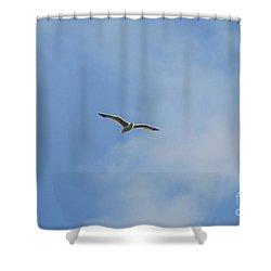 Herring Sea Gull 20120409_241a Shower Curtain by Tina Hopkins