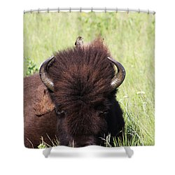 Hey There Is A Bird On Your Head Shower Curtain by Alyce Taylor