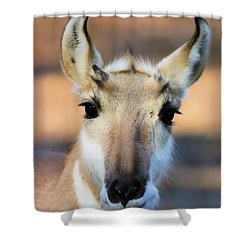 Hey You Shower Curtain by Karol Livote