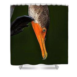 Hi... Shower Curtain