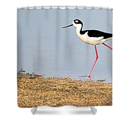 Shower Curtain featuring the photograph Hi-stepper by AJ Schibig