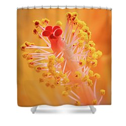 Shower Curtain featuring the photograph Hibiscus-1 by David Coblitz