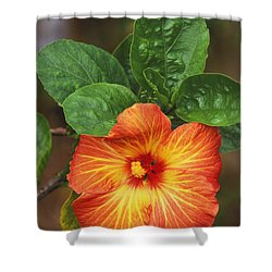 Hibiscus Shower Curtain by Allan Seiden - Printscapes