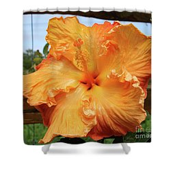 Hibiscus And Fence Shower Curtain by Mary Haber