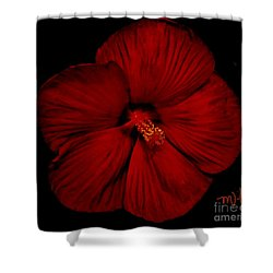 Hibiscus By Moonlight Shower Curtain by Marsha Heiken