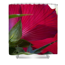Shower Curtain featuring the photograph Hibiscus by Charles Harden
