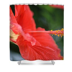 Hibiscus Closeup Shower Curtain