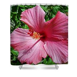 Hibiscus Flower Shower Curtain