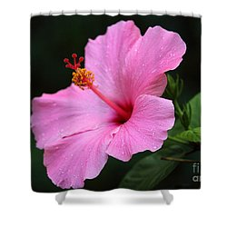 Shower Curtain featuring the photograph Hibiscus In Pink by Lisa L Silva