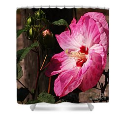 Shower Curtain featuring the photograph Hibiscus  by J L Zarek