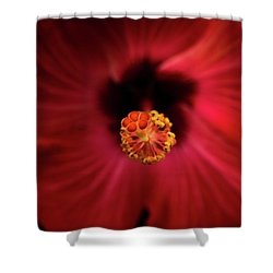 Hibiscus Shower Curtain by Jay Stockhaus