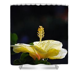Shower Curtain featuring the photograph Hibiscus Morning by Debbie Karnes
