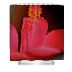 Hibiscus Shadows Shower Curtain