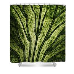 Hibiscus Tiliaceus Variegata 2 Shower Curtain