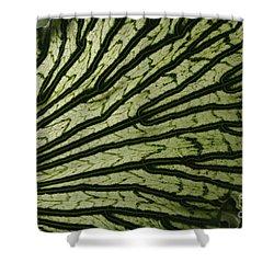 Hibiscus Tiliaceus Variegata Shower Curtain