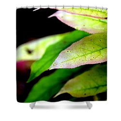 Hickory Leaf Shower Curtain