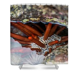 Shower Curtain featuring the photograph Hidden Treasure by Colleen Coccia