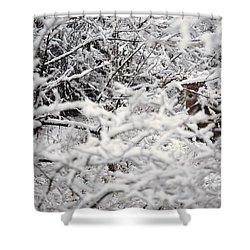 Hidden Treasure Shower Curtain by Eric Liller
