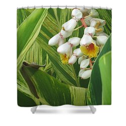 Hidden Tropic Shower Curtain