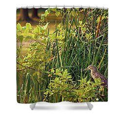 Hiden Shower Curtain