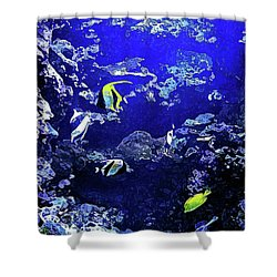 Hiding Fish Shower Curtain