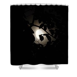Hiding - Leaves Over Moon Shower Curtain
