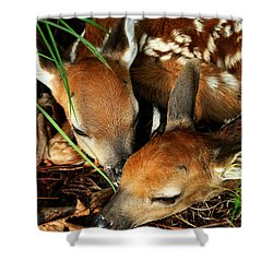 Hiding Twin Whitetail Fawns Shower Curtain by Michael Dougherty