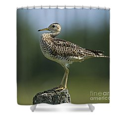 Hieroglyphic Sandpiper... Shower Curtain by Nina Stavlund