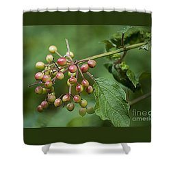 High Bush Cranberry 20120703_106a Shower Curtain
