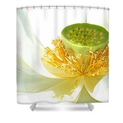 High Key Lotus Shower Curtain by Sabrina L Ryan