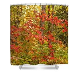 Highbush Cranberry Shower Curtain by Jim Sauchyn