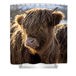 Highland Baby Coo Shower Curtain