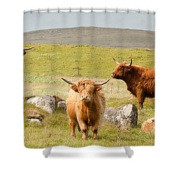 Highland Cattle Shower Curtain by Colette Panaioti