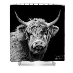 Highland Coo Shower Curtain by Linsey Williams