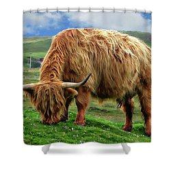 Highland Cow Shower Curtain by Anthony Dezenzio