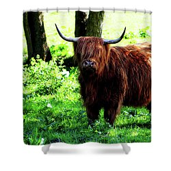 Highland Cow Shower Curtain by Dan Pearce