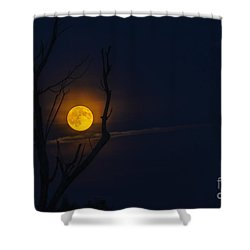 Highland Moon  Shower Curtain