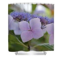 Highlands Hydrangea Shower Curtain by Amy Fearn